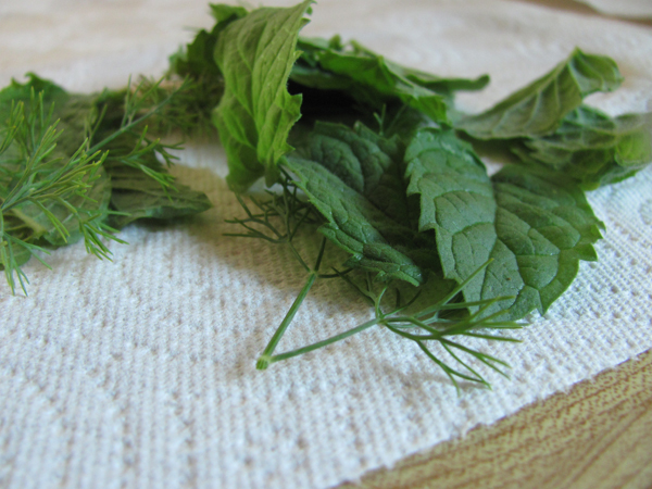 Fresh Mint and Dill